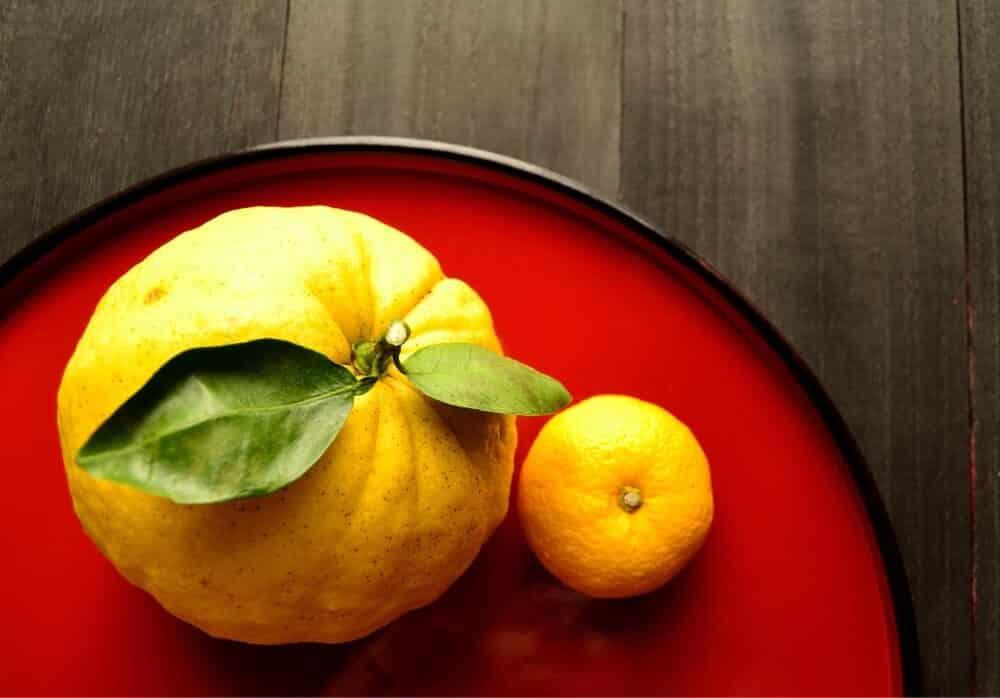 Yuzu & Mikan & Sudachi, Oh My! Japan's Most Popular Citrus Fruit
