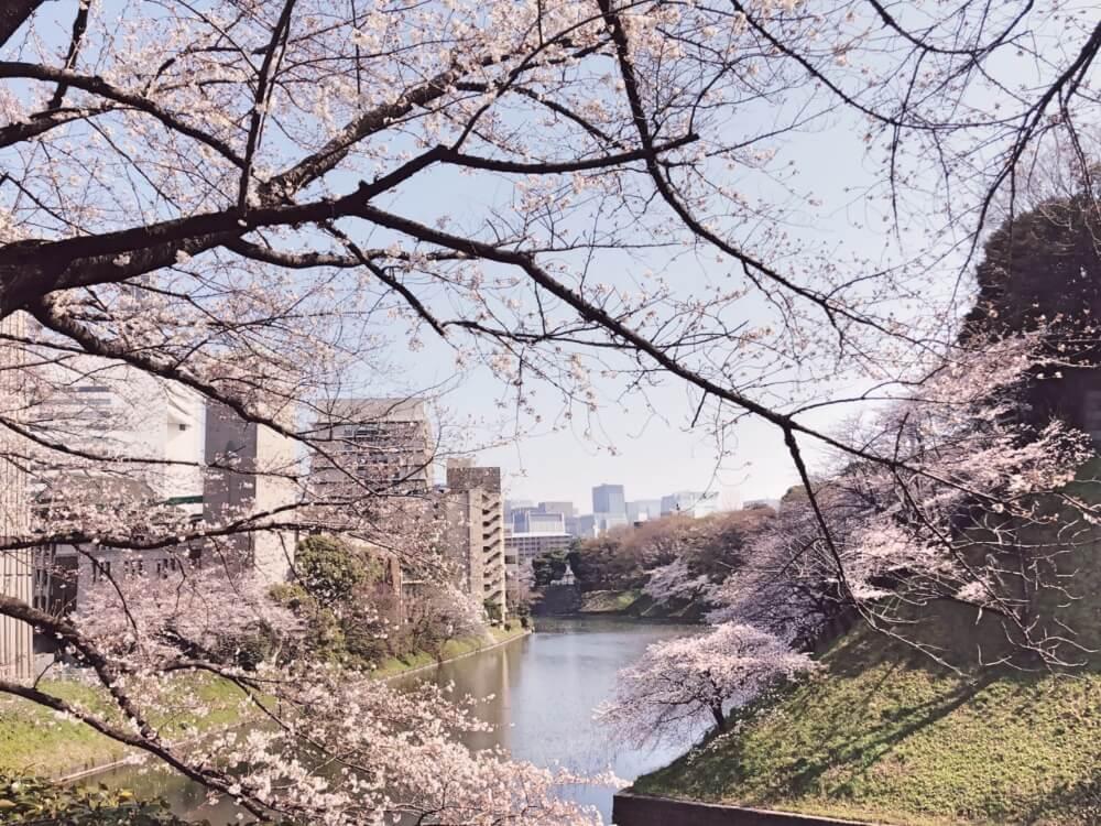 Sakuramochi: See Beautiful Cherry Blossoms, then Eat Them?!
