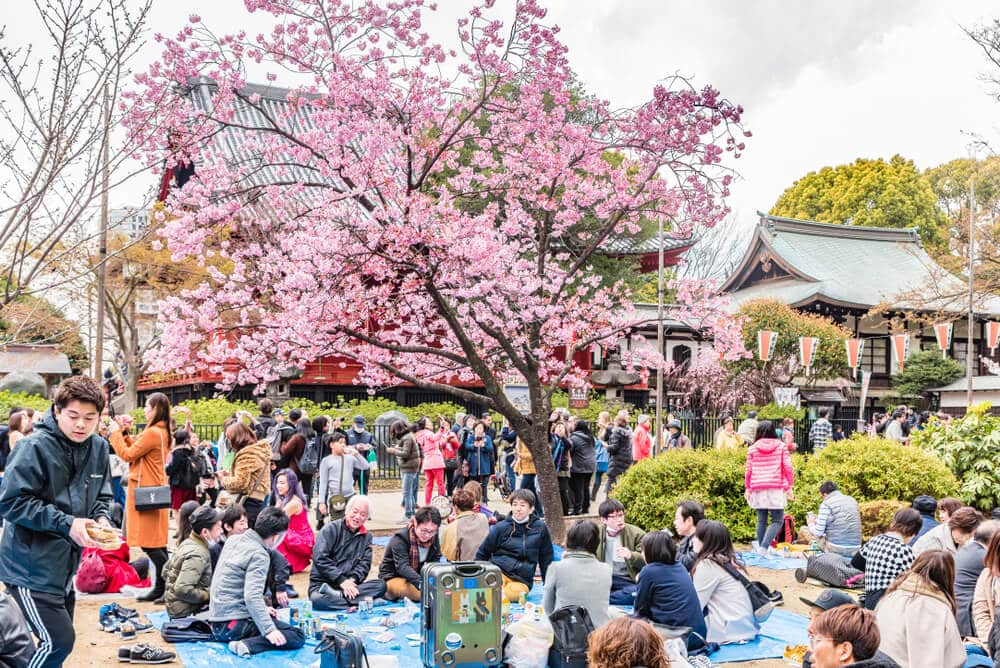 Hanami, the Fleetingness of Beauty in a Year of Crisis