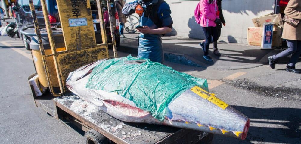 Tsukiji & Toyosu Fish Market: A Brief History